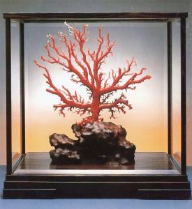 ガラスケース入り珊瑚原木